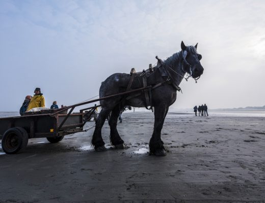 Wat te doen in Koksijde - Garnaalvissers te Paard in Oostduinkerke